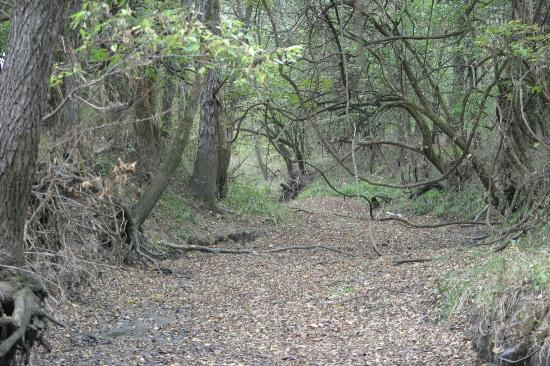 Cottage on the Knoll at Cedarcroft Farm: The creek is a great place to hike!