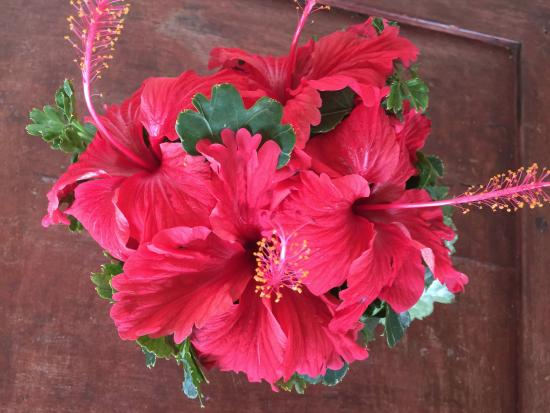 Sazani Beach Lodge: Hibiscus on our morning coffee table, replenished daily