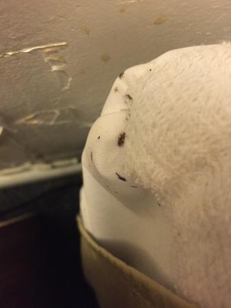 Sunrise Motor Inn: Bedbugs in Room 123