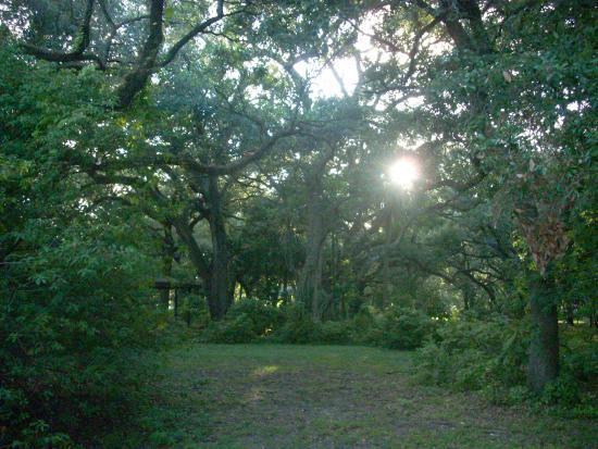 John Williams Park/Sheridan Oak Forest