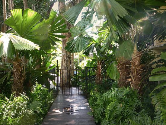 Reef Club Resort: Garden path