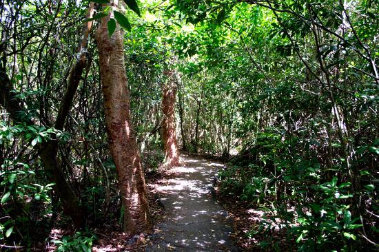 Gumbo Limbo Trail: A lot of shadow