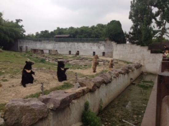 Ningbo Zoo : 物乞いをするクマたち