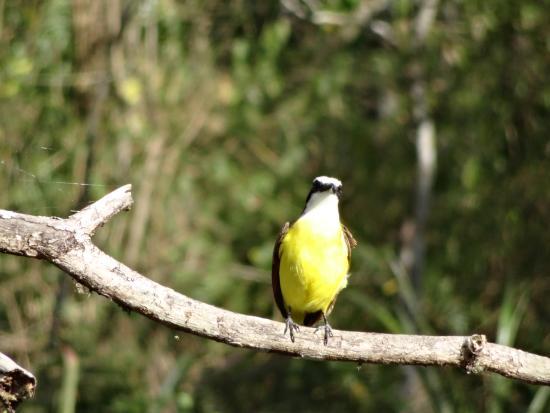 El Escondido: birds on the finca