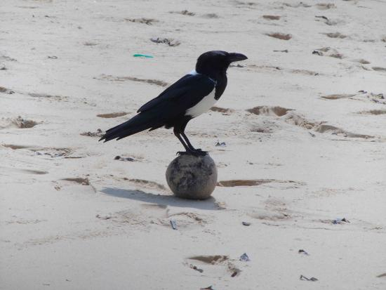 Архипелаг Базаруто, Мозамбик: bird