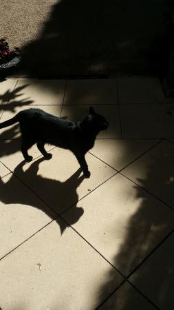 Villa de Margot: House cat