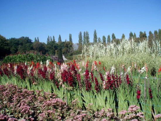 Château de Chenonceau : Potager des fleurs  Glaïeuls