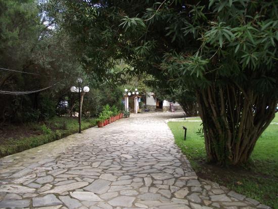 Tree Lined Pathway Bild Fr N Amalia Apartments