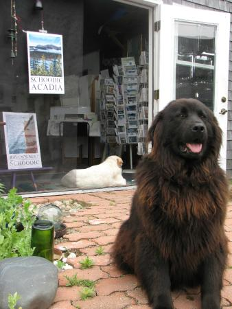 Winter Harbor, ME: Gallery Greeter