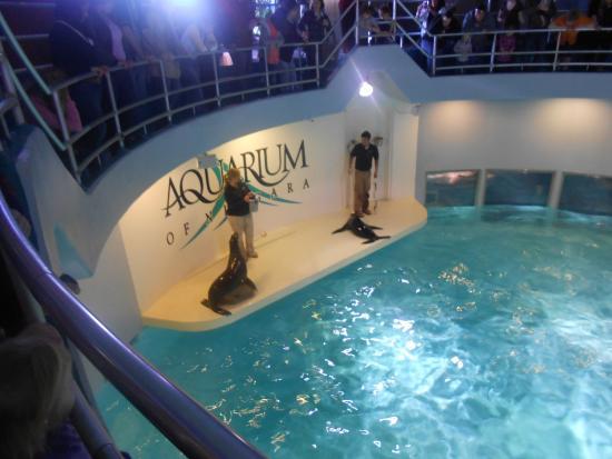 Niagara Falls Aquarium Picture Of Aquarium Of Niagara