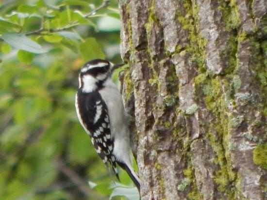 Hammond Lakefront Park and Bird Santuary