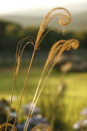 Addo, Sudáfrica: Gardens