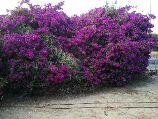 деревья покрыты лианами сереневого , розового, красного цвета