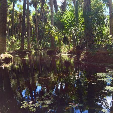 Jupiter, FL: Kayaking on the Loxahatchee