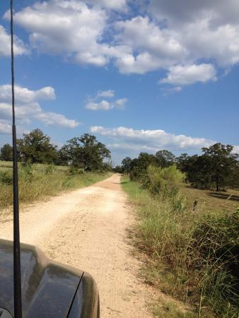 Ledbetter, TX : Approach to the ranch - dirt road dreamin'