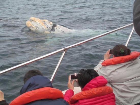 Punta Ballena Jorge Schmid: Un ballenato blanco