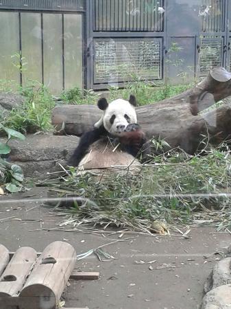 きりん - Bild von Ueno Zoo, Taito - TripAdvisor
