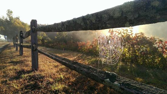 Sandy Hook, CT: Sunrise at the Vineyard