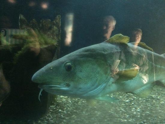 poisson picture of aquarium du city tripadvisor