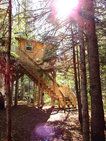 Camping Miramichi - A Treehouse Resort: The Birches Treehouse