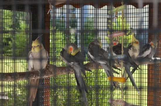 Hotel Pigeon Forge : Birds in their santuary