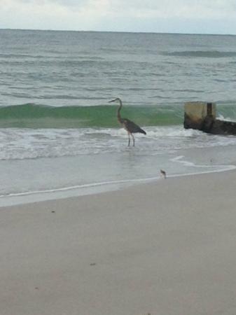 Sandy Shores: Beach Birds