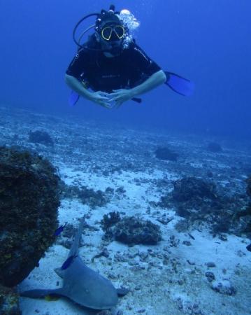 Dive Little Corn - Day Dives: Nurse Shark at Blowing Rock