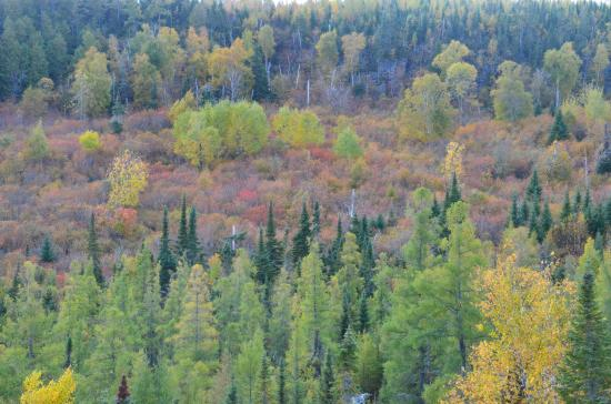 Gunflint Lodge: view from the zip line