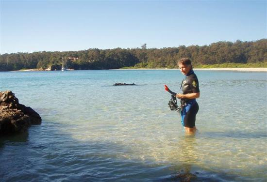 Sapphire Coast Marine Discovery Centre: Guided Snorkel Tours available at one of the Sapphire Coast's beautiful beaches