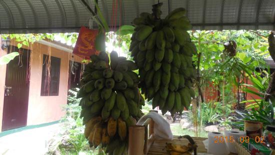 SDT Home: 食べ放題バナナ。美味しかったー