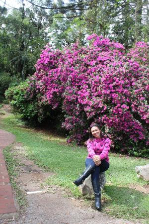 Lindas Flores Picture Of Black Lake Gramado Tripadvisor