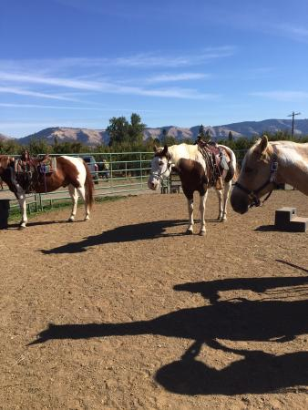 Double Mountain Ranch: The stars of the day!