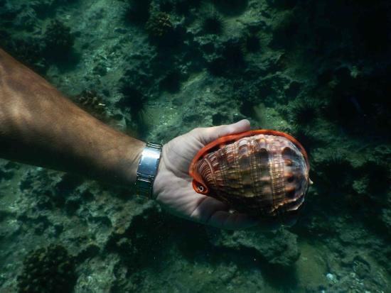 Zavora Lodge: shells, found some life