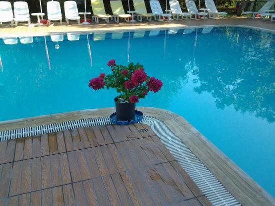 Ozturk Hotel Hisaronu: Flowees by the pool