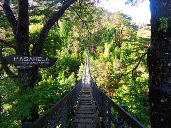 Curarrehue, Cile: Camino de Curarrahue a Reigolil, visita una de las pasarelas más altas de Chile. Imperdible!