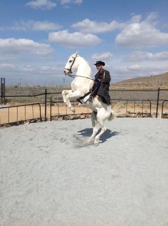 Boadilla del Monte, สเปน: Caballo BlancoO...