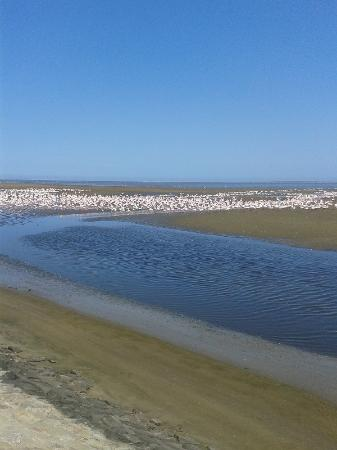 Dolphin Tours Namibia: Flamingoes colony near Walvis Bay