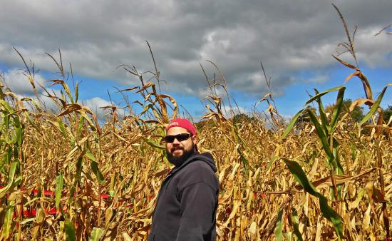 Thompson, CT: Amongst the corn.