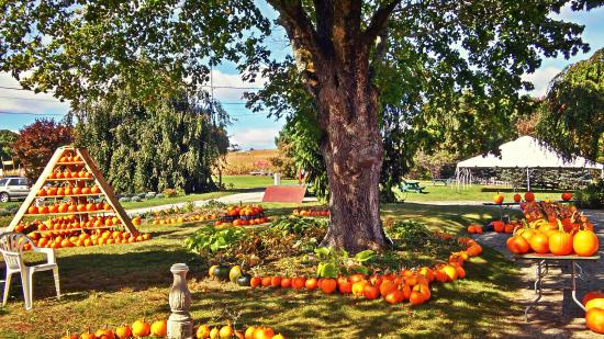 Thompson, CT: Lots of pumpkins to pick from!