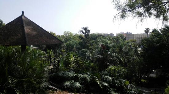 Fotos y horario de octubre jard n bot nico molino de inca for Jardin botanico horario
