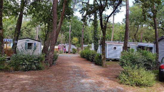 Allées  Picture of Camping lOree du Bois, La PalmyreLes  ~ Oree Du Bois Les Mathes