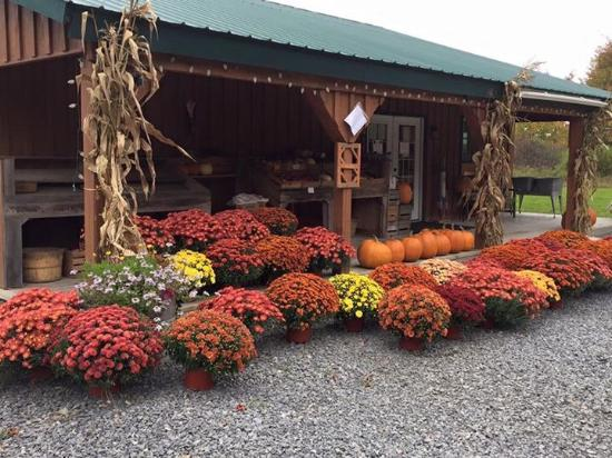 Morris, NY: Beautiful mum display.