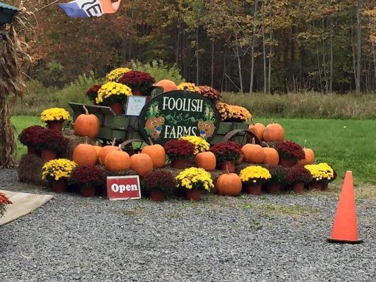 Morris, NY: Foolish Farms...old wagon, mums and pumpkins. Beautiful!!