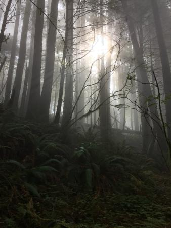 Tillamook Head Traverse Hike : Rain Forest