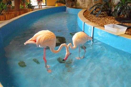Flamingos 1 Picture Of Gulf World Marine Park Panama City