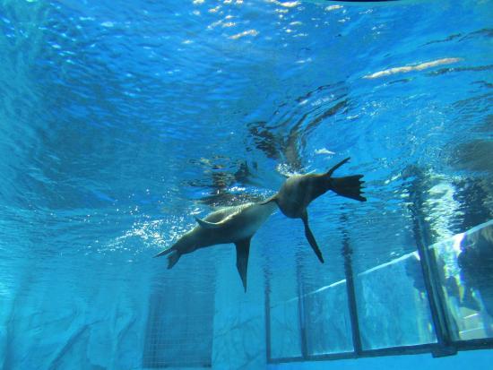 Per Gardaland Sea Life Aquarium L Iniziativa Si Inserisce In Una ...