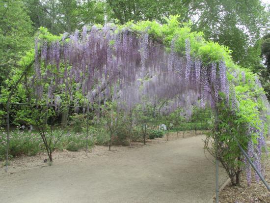 Picture of adelaide botanic garden adelaide for Adelaide gardens