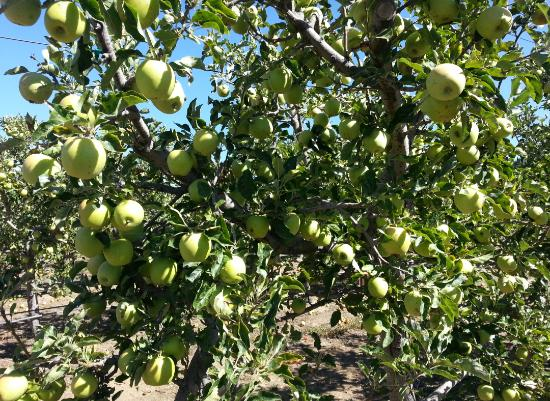 Volcan Valley Apple Farm