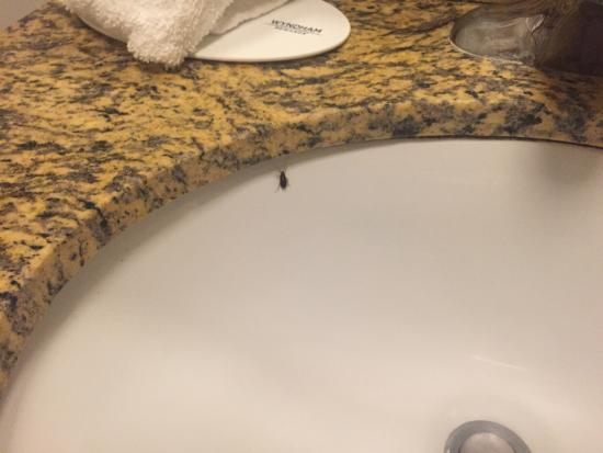 Travelodge LAX South: One of the live roaches in our room on Sept 24, 2015.