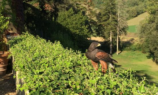 Vicchio, Italien: They had the falcon fly right up next to us